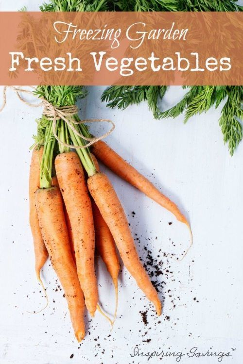 Freezing vegetables preserves the taste of your summer garden for enjoyment all winter long. Learn how to freeze fresh vegetables to enjoy.