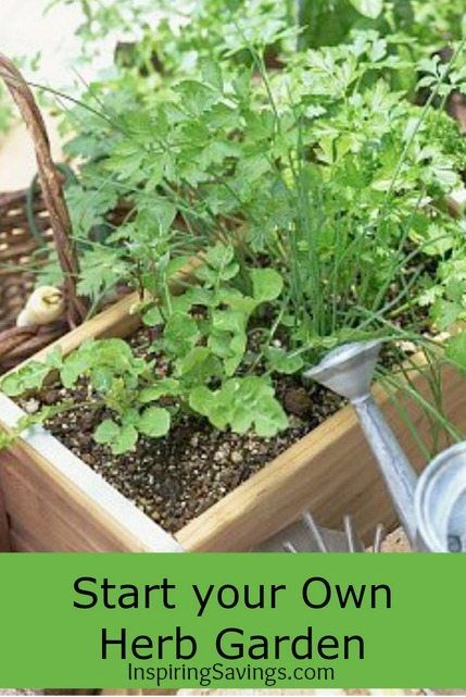 Growing your own kitchen herb garden is a simple and inexpensive undertaking that pays off big for your taste buds and your budget. Learn to grow your own.