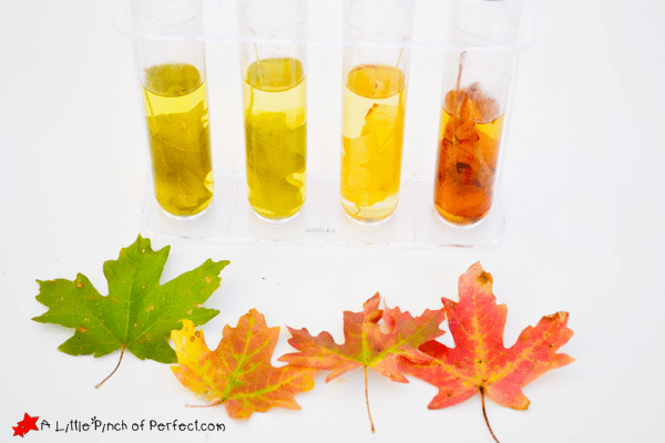 Fall Leave turned into a creative Color Science Experiment