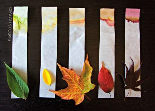 kids science experiment from fall leaves