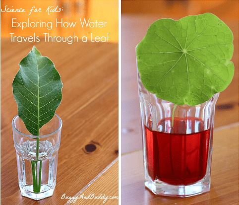 Learn about leaves with water